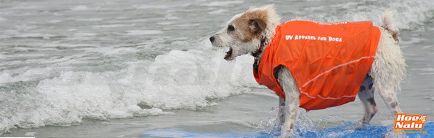 Entrena a tu perro para hacer Stand Up Paddle