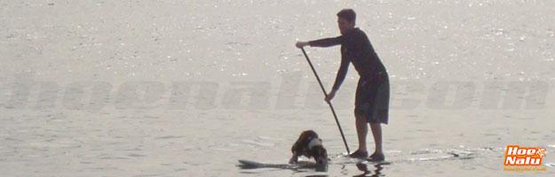 Remar y hacer SUP con un perro