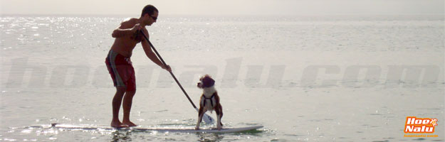 Hacer Stand Up Paddle, SUP con tu perro
