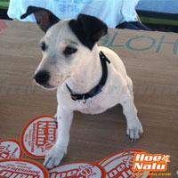 HoeNalu tienda online de SUP con los Perros