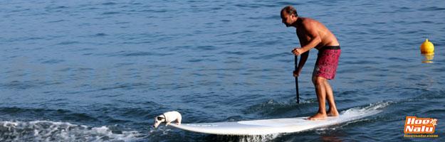 Llegando a la orilla con tu perro en tu tabla de SUP