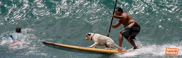 Entrena a tu perro para practicar SUP surf