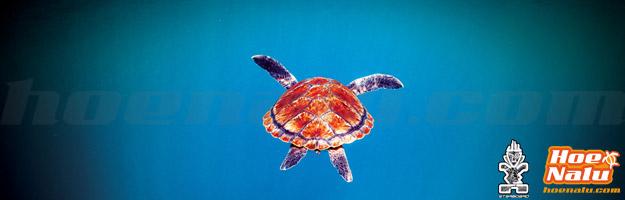 Honu, tortuga en Hawaiiano el símbolo de HoeNalu