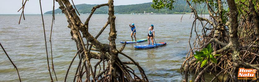 Starboard planta manglares para reducir su huella de carbono